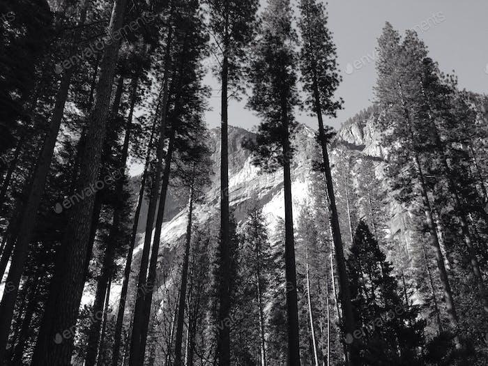 Channeling meiner inneren Ansel Adams während des Yosemite National Park