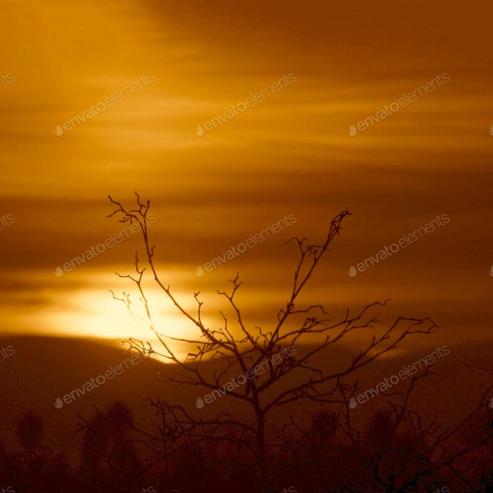 Bare tree at sunrise