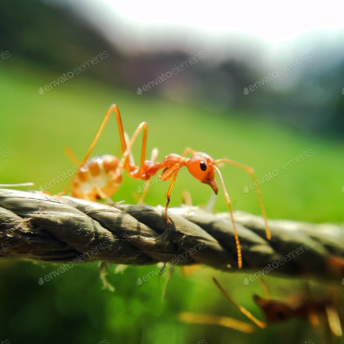 Ant crawling on rope