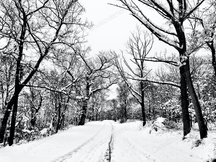 Feb. 2013. South Mountain Reservation, South Orange, NJ.