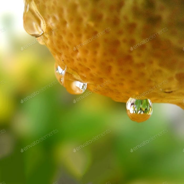 Water drops dripping from lemon