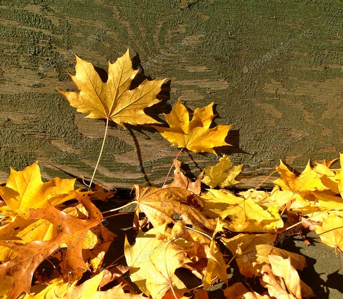 Dried maple leaves on landscape