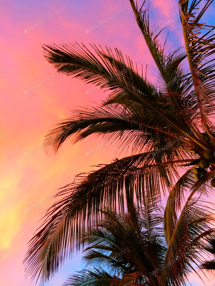 Close-up of palm fronds at sunset