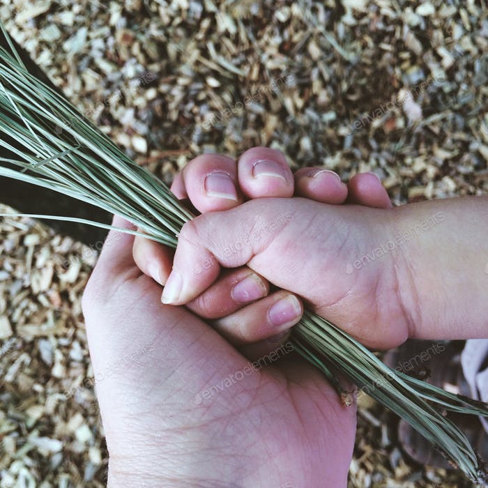 Human hands holding weeds