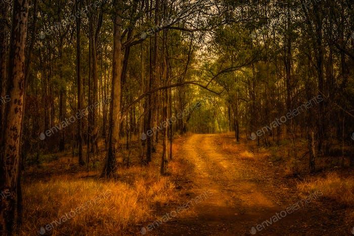 Pathway into the Bush