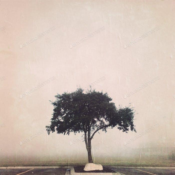 Tree in parking lot