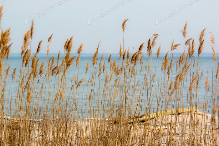 Sea Oats Chesapeake Bay beachfront southern Maryland USA