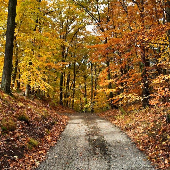 Pathway through forest in autumn