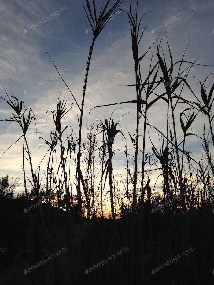 Die Silhouetten der Natur beim Sonnenuntergang.