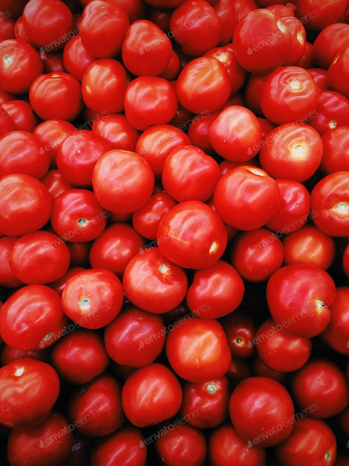 Red shining tomatoes