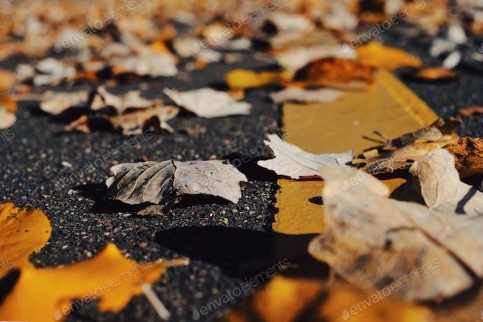 Baja vista de ángel en la carretera con hojas de otoño
