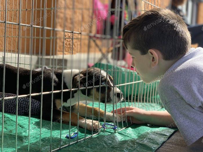 National pet adoption day