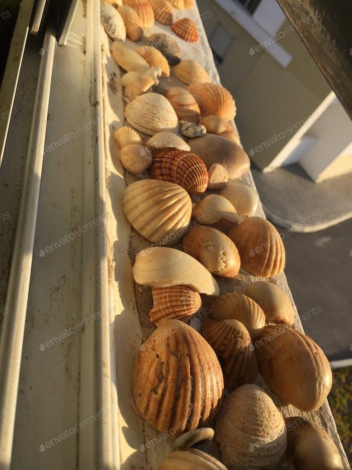Seashells 🐚