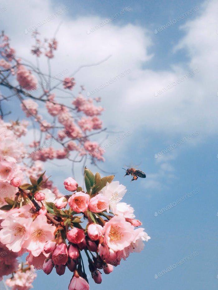 Spring is buzzing