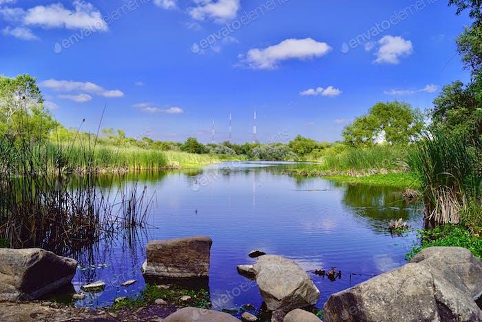 Vögel auf dem hellen und schönen See