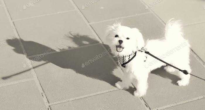 Cute Little Doggie-Big Shadow!