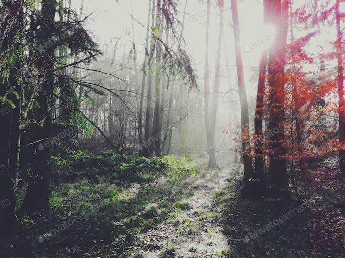В лес.