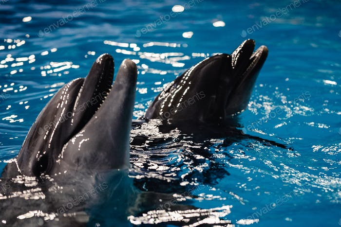 Dolphins in the dolphinarium.