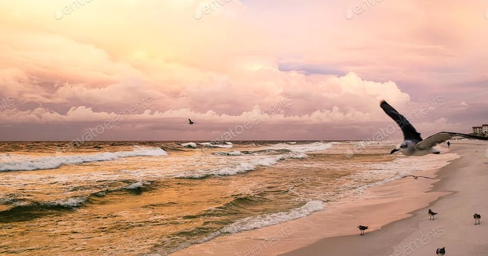 A flying seagull is in the colorful sky at sunrise during the golden hour with an awesome cloudscape