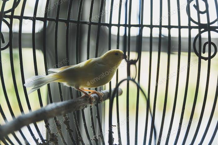 Vogel in einem Vogelkäfig.