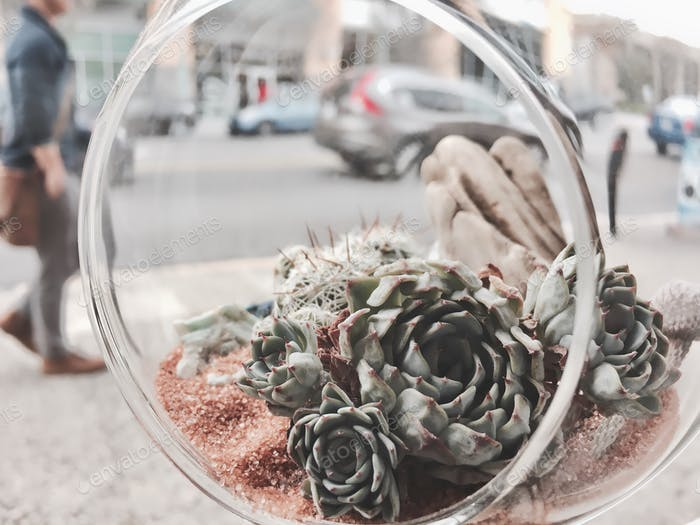 Thinking about buying a succulent