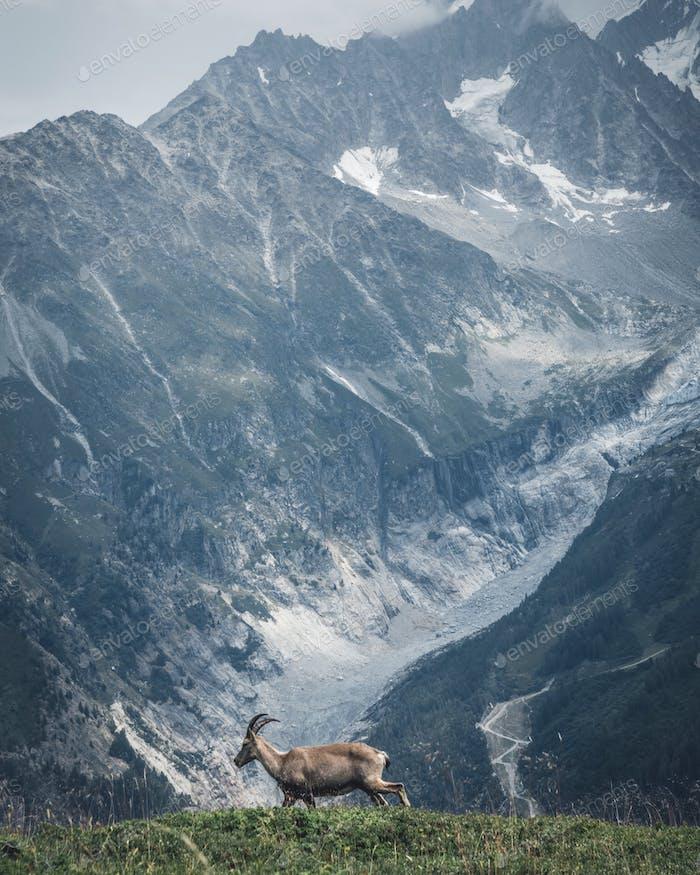 Alpine Begegnungen.