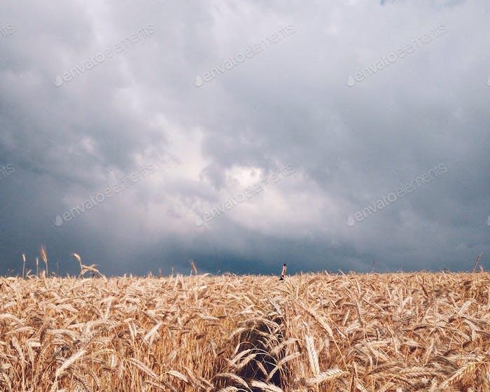 Sturm einfangen