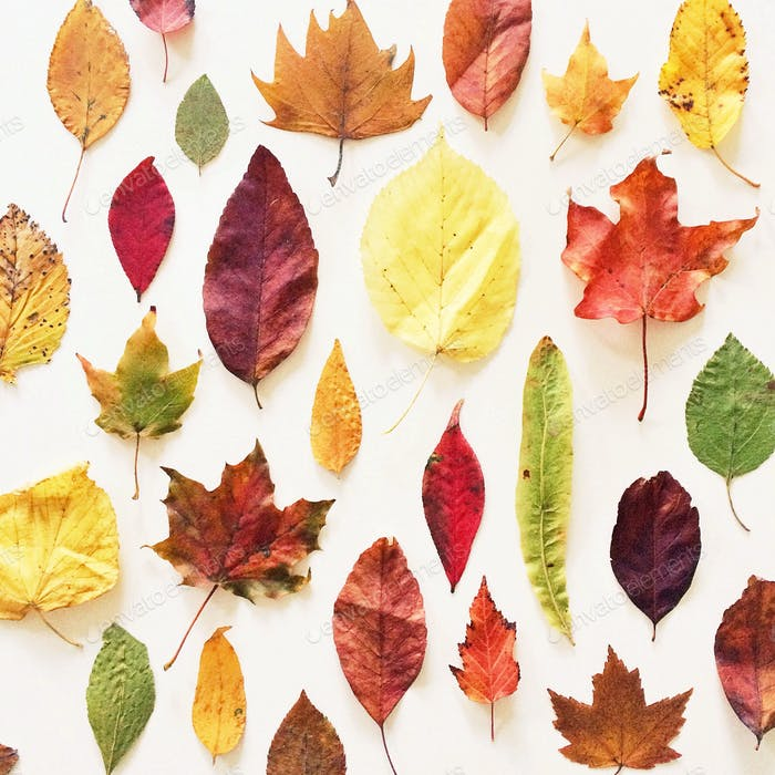 Looking down at a colorful assortment of fall leaves on a white background.