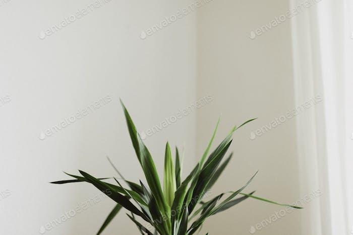Plant in corner