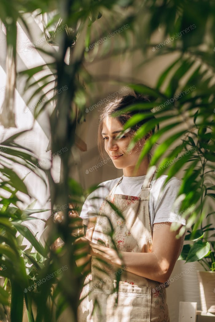 A young woman is watering indoor plants at home.Home gardening.Urban jungle and biophilic concept.