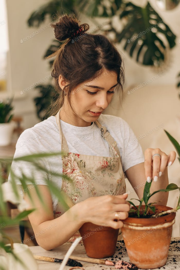 A young woman plants a houseplant in a pot at home.Home gardening.Urban jungle,biophilic concept.