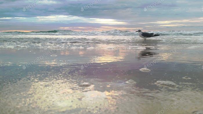 Birdie in a pastel sea...