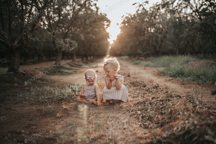 Toddlers in a almond orchard