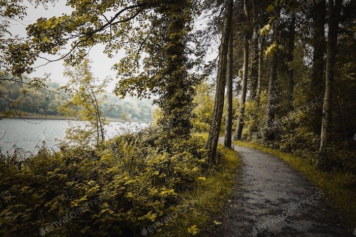 Lush green woodland