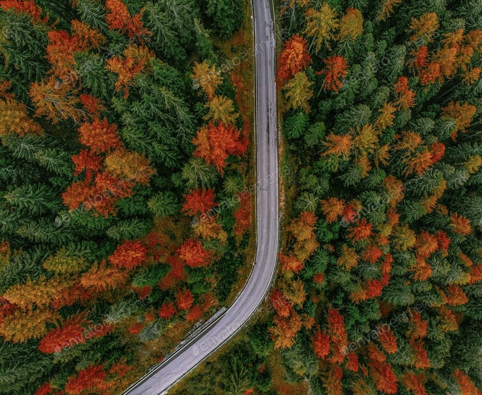 Aerial view of a road through the forest
