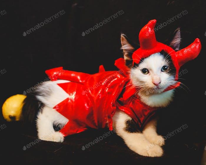 Devil Kitten