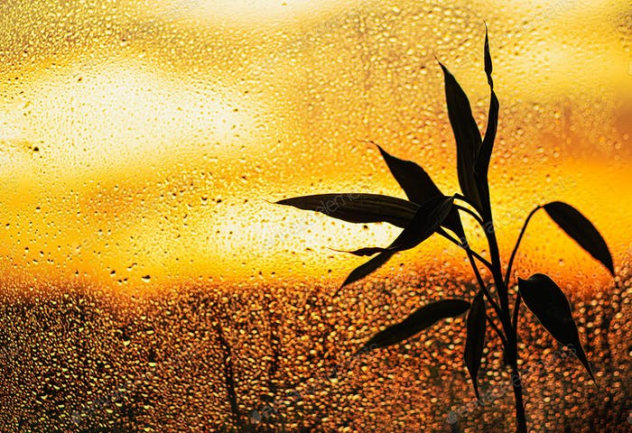 Bamboo plant silhouette on the background of the window, with rain drops at sunset. Autumn concept.