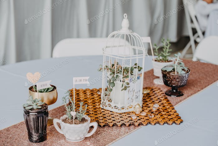 Wedding details of a plant inside of a birdcage on a table next to other small pots of flowers