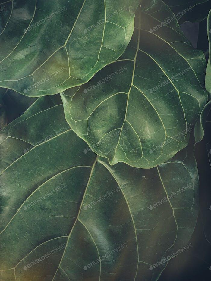 Leafy moody background