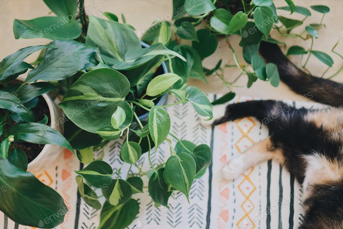 Perfect pets cat laying down next to houseplants