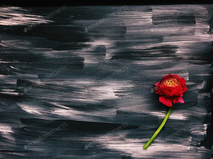 Abstract acrylic painted background and red Ranunculus