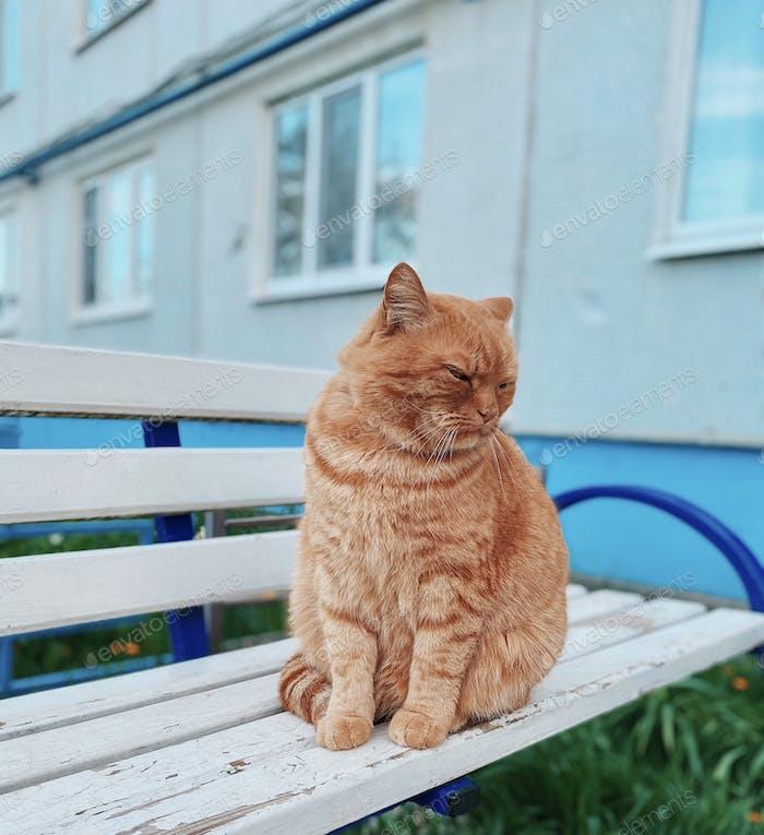 Outdoors cat portrait