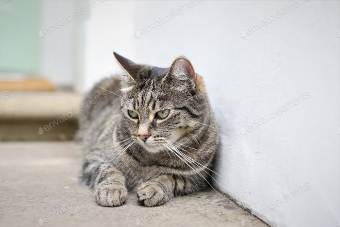 Cat resting against a white wall