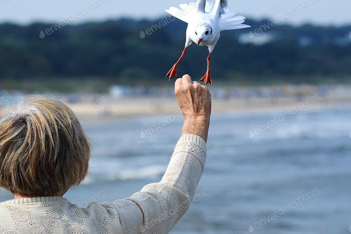 Grandma feeds seagull