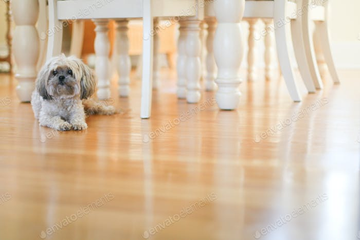 dog in a brightly lit dining room