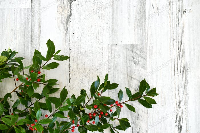 A simple holiday background of green holly branches with red berries laying on white distressed wood