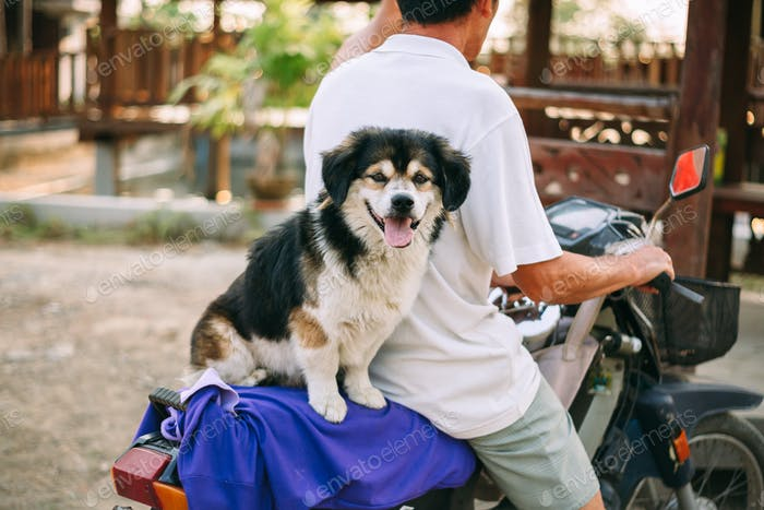 Cute dog sitting on a motorcycle with owner
