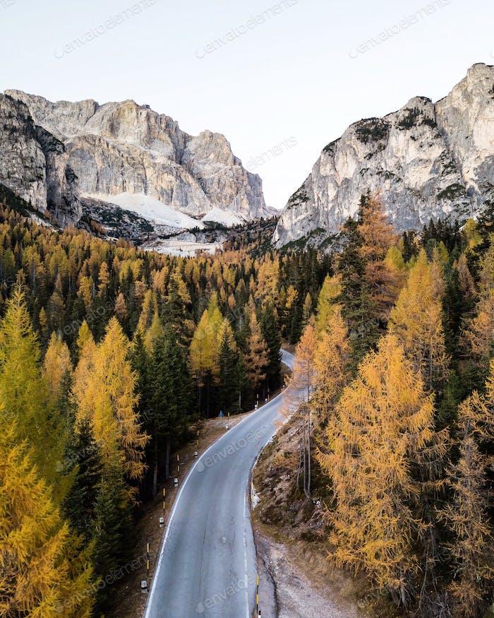 Dolomites foliage