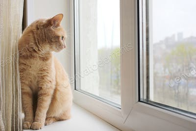 A red cat sitting on the windowsill and looking out the window