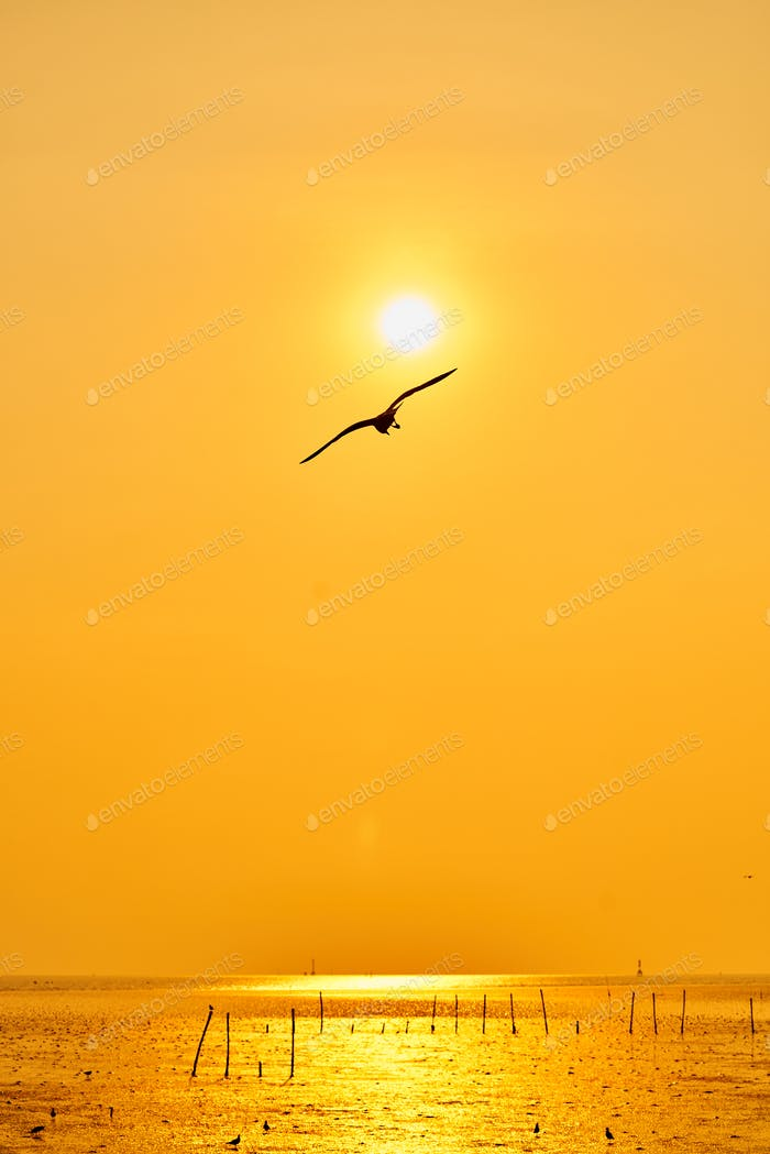 Seagull flying in the orange sky background